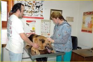 Consulta - Consulta veterinaria todas las especialidades.   