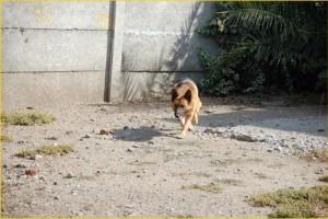 Patio - Para que su mascota se sienta como en casa es que contamos con amplios patios para que ellos puedan salir a disfrutar del aire libre dos veces al día.