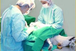 cirugía - Estamos en condiciones de realizar cirugías menores en mascotas grandes y pequeñas.