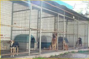 hotel canino - Viaje tranquilo. Nuestro servicio de hotel canino le asegura que su perro tendrá el mejor servicio y atención.