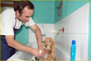 peluquería - Baño sanitario, control de parásitos, corte de pelo, etc.