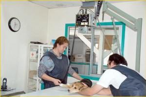 radiografía - Estamos en condiciones de realizar cirugías menores en mascotas grandes y pequeñas